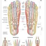 Reflexology foot chart - guidelines
