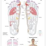 Reflexology foot chart - respiratory system