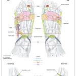 Reflexology foot chart - lymphatic system