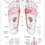 Reflexology foot chart - cardiovascular system