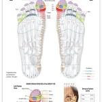 Reflexology foot chart - sensory system