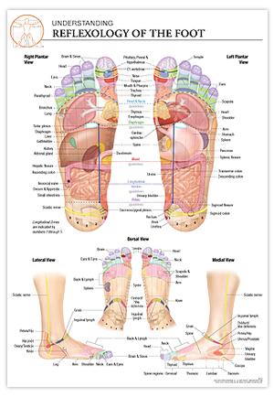 Reflexology Foot Chart Of The Feet
