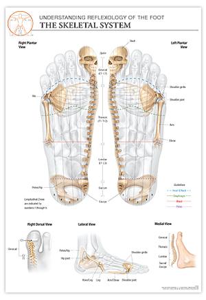 Reflexology Foot Chart Skeletal System The Stone Institute Llc