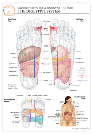 Reflexology Foot Diagram | Reflexology Foot Chart Digestive System The Stone Institute Llc