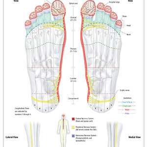 Reflexology Foot Chart Respiratory System The Stone Institute Llc